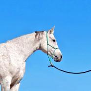 (Română) Calul, un prieten, prin dresajul natural